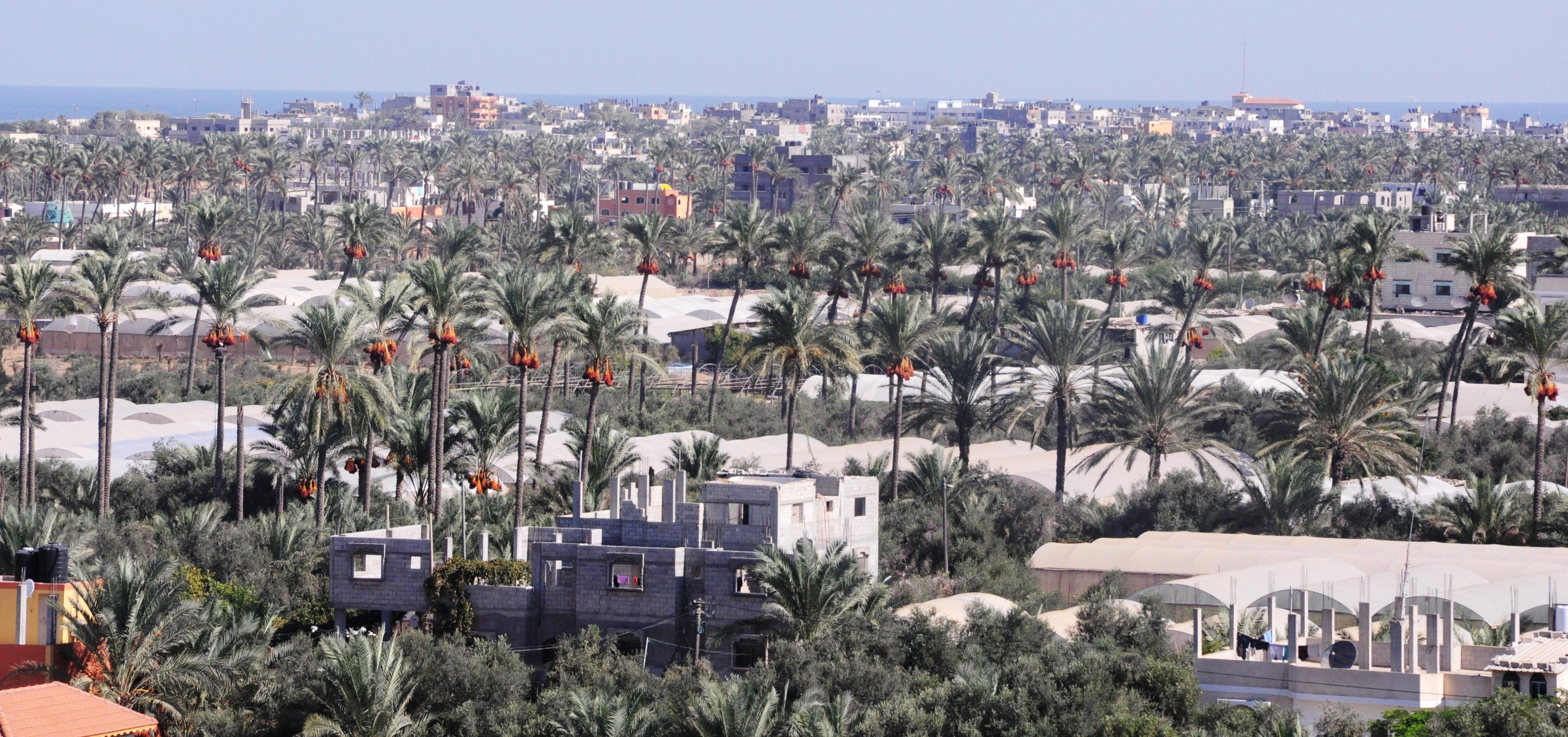 مدينة دير البلح