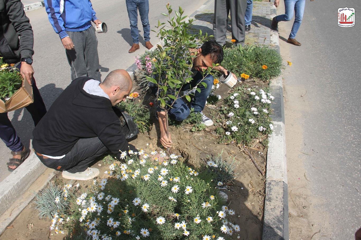 زراعة أشتال الزهور في وسط المدينة