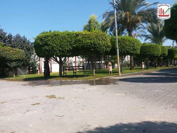 تهذيب وقص الاشجار بمنتزه المحطة