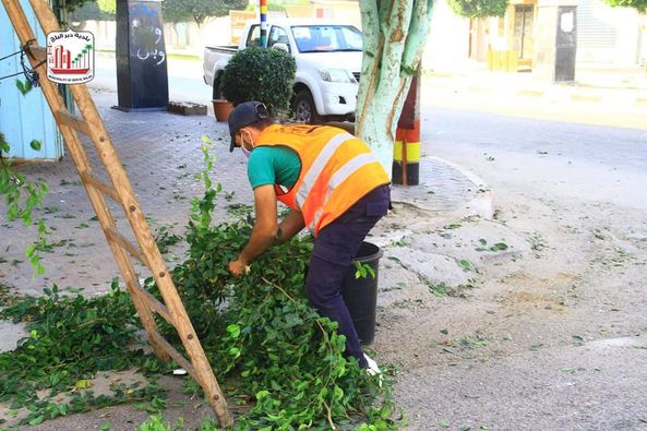 قص وتهذيب الأشجار بشارع الشهداء