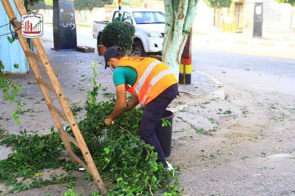 تهذيب وقص الأشجار بشارع الشهداء بالمدينة