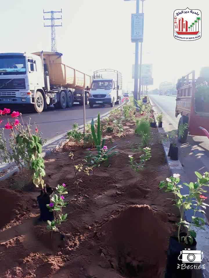 زراعة أشجار على مدخل البلدية الشرقي شارع صلاح الدين