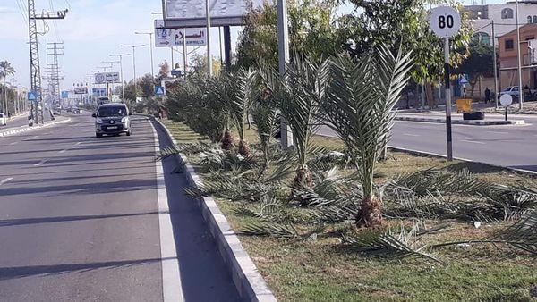صناع الجمال يواصلون تهذيب وقص الأشجار على مدخل المدينة الشرقي-شارع صلاح الدين