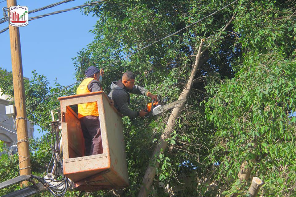 إزالة عدد من الأشجار بشارع عبد الكريم العكلوك
