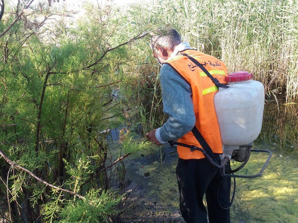 القيام بمكافحة حشرة البعوض في المدينة